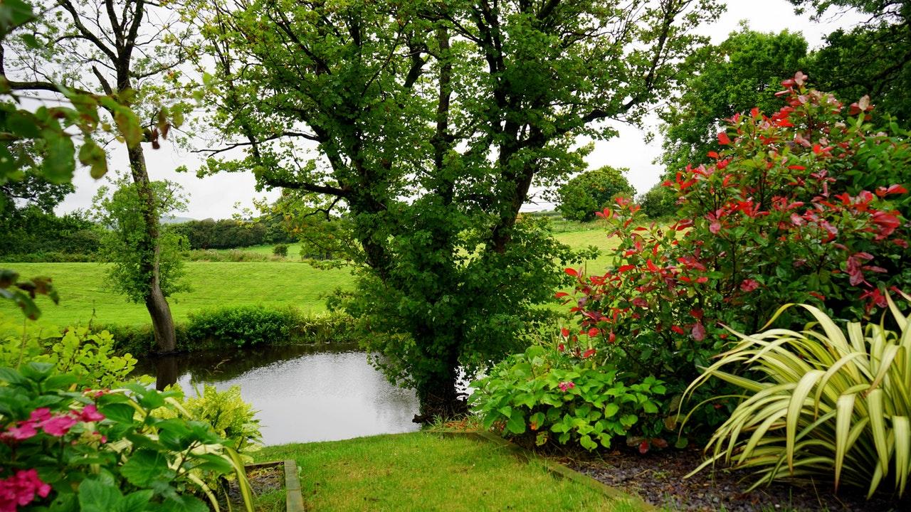 Växter och blommor i trädgården